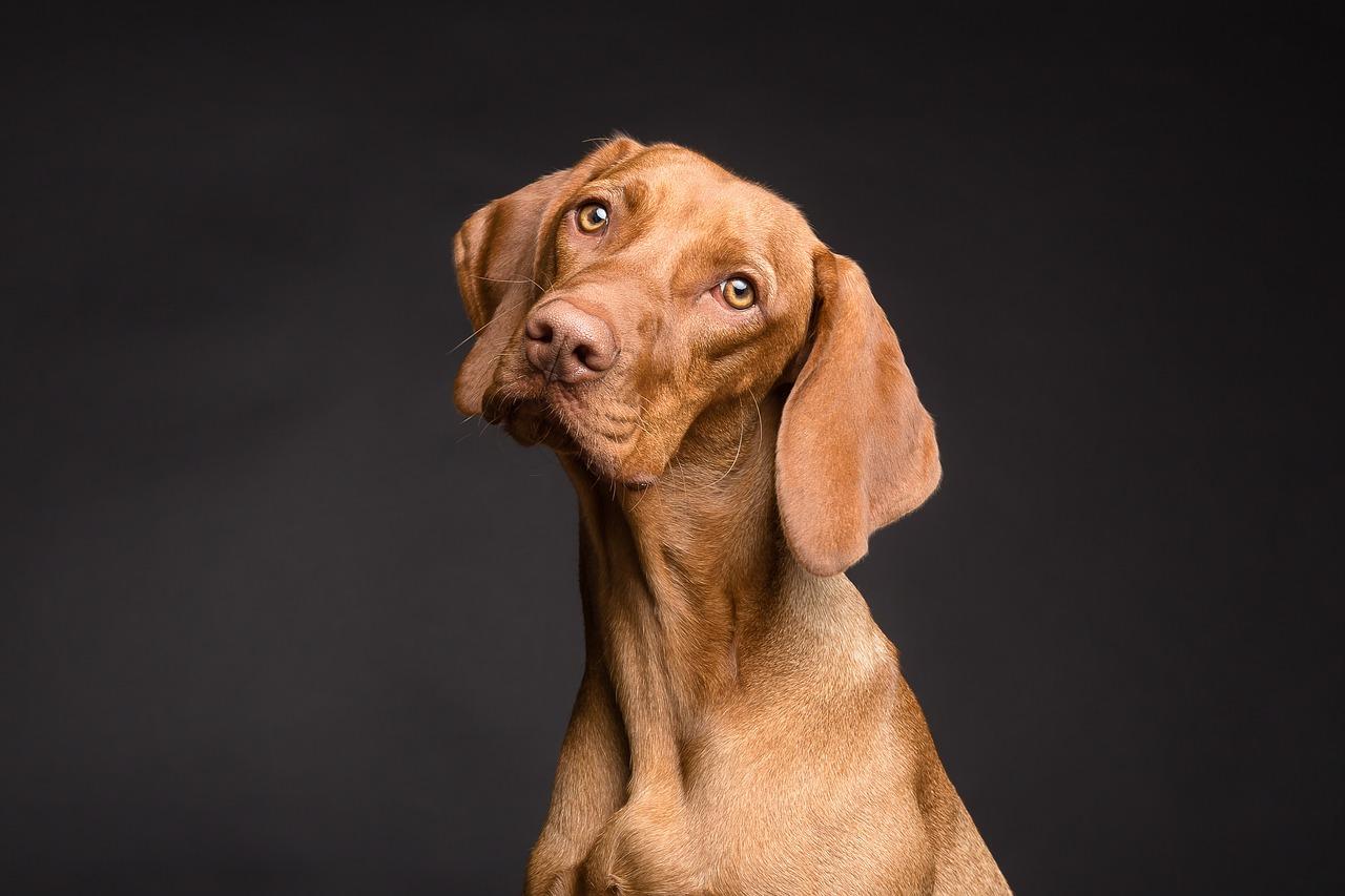 Miejsca, w których zamieszcza się ogłoszenia o zaginionych psach